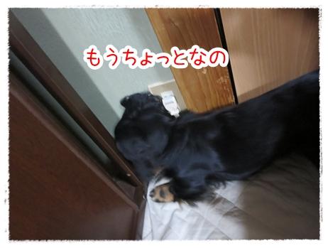 IMG_0328_6.jpg