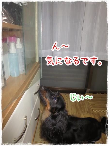 IMG_0329_9.jpg