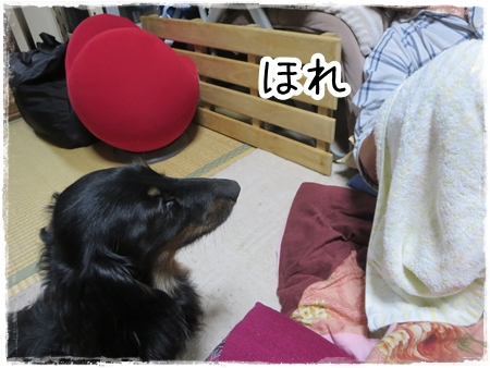 IMG_0330_11.jpg