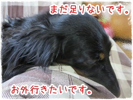 IMG_0330_6.jpg