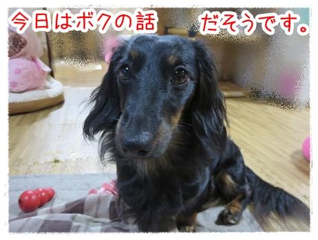 IMG_0401_1.jpg