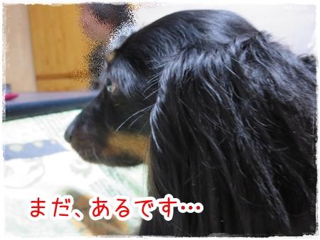 IMG_0413_11.jpg