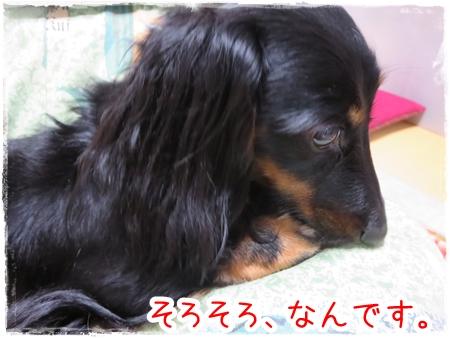 IMG_0413_5.jpg