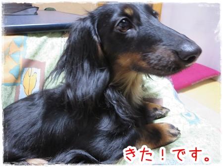 IMG_0413_6.jpg