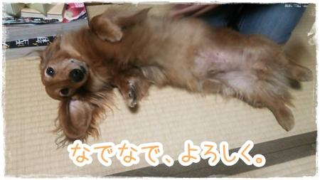 IMG_0414_5.jpg