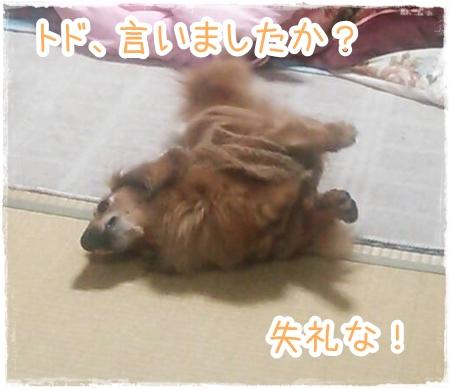 IMG_0414_7.jpg