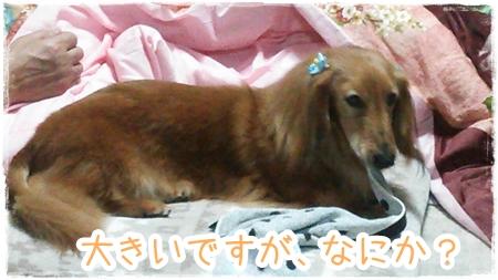 IMG_0414_8.jpg