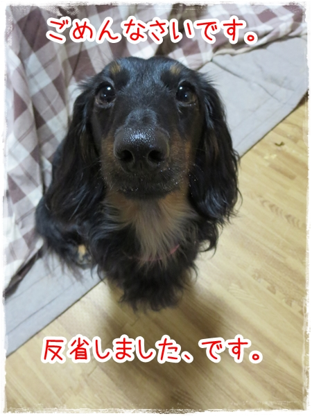 IMG_0422_4.jpg