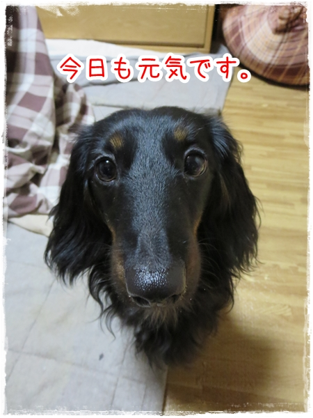 IMG_0423_1.jpg