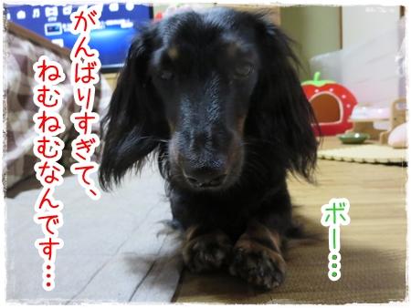 IMG_0423_6.jpg
