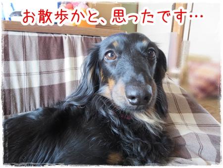 IMG_0427_1.jpg