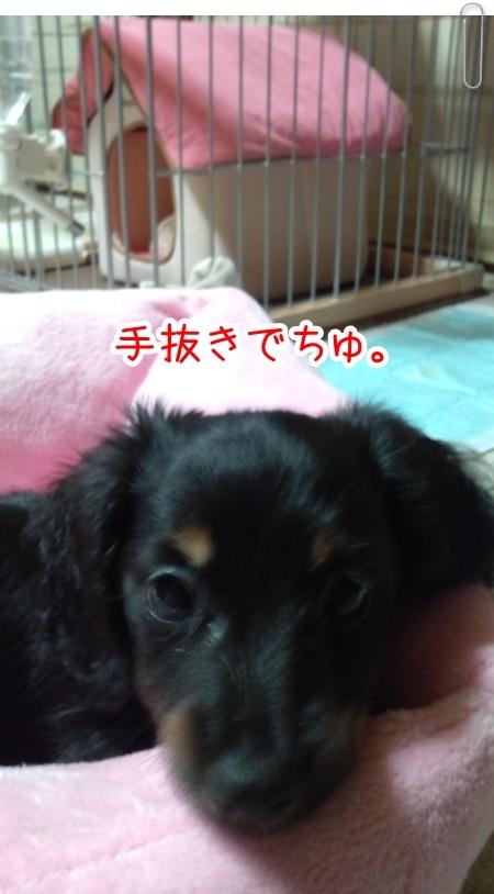 IMG_0428_1.jpg