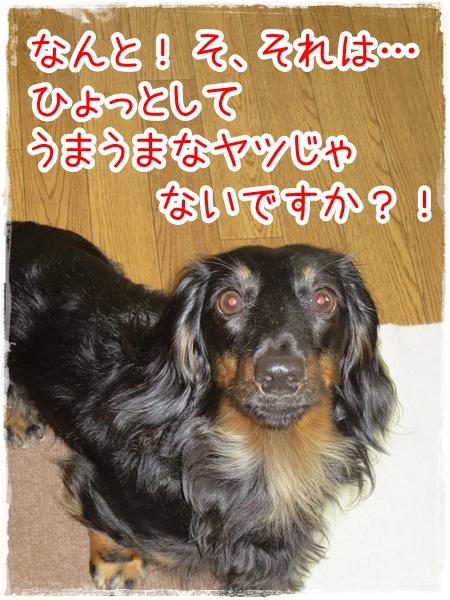 IMG_0429_5.jpg