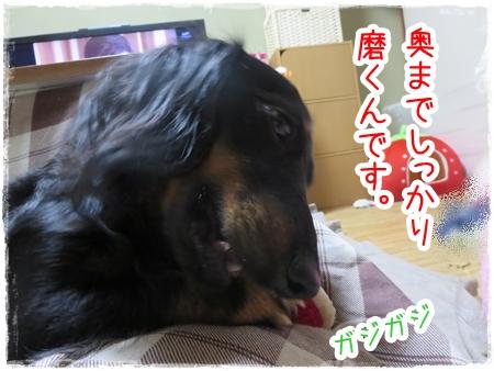 IMG_0430_2.jpg