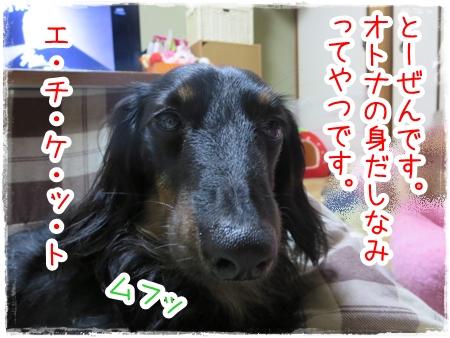 IMG_0430_3.jpg