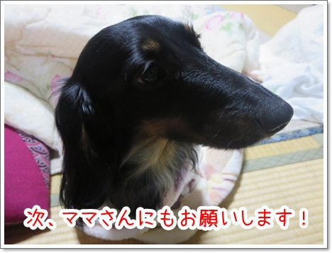 IMG_0507_6_2.jpg