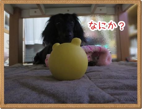 IMG_0510_6.jpg