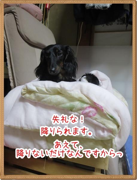 IMG_0514_7.jpg
