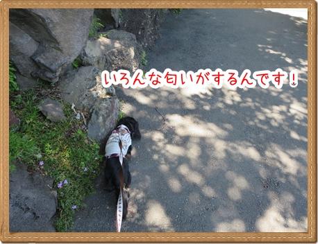 IMG_0517_5.jpg