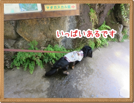 IMG_0518_9.jpg