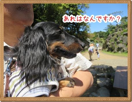 IMG_0520_1.jpg