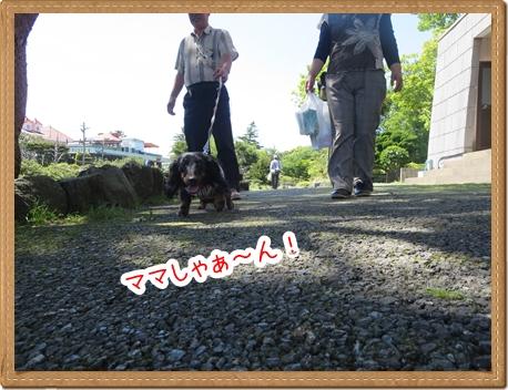 IMG_0520_12.jpg