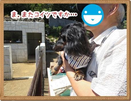 IMG_0520_5.jpg