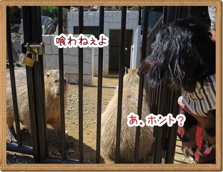 IMG_0520_9.jpg