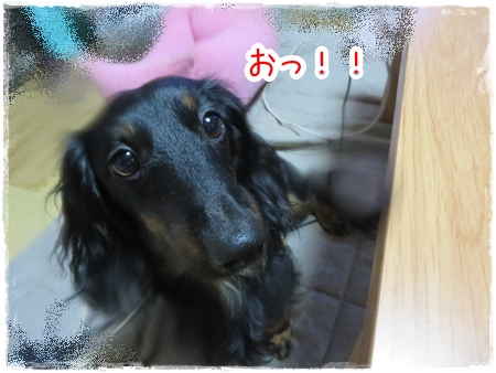 IMG_0525_2.jpg