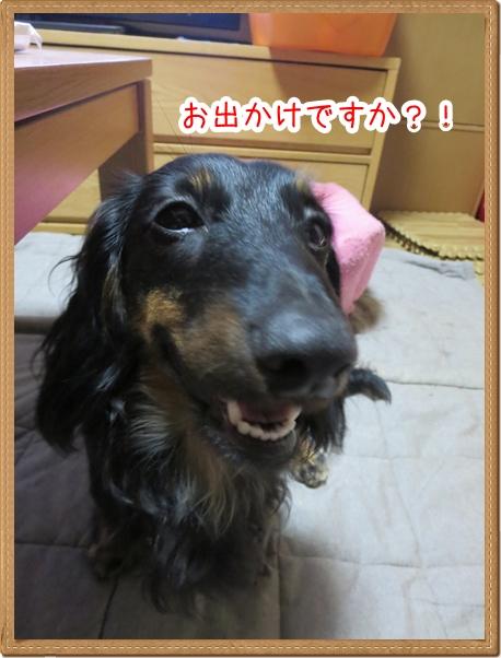 IMG_0601_1.jpg