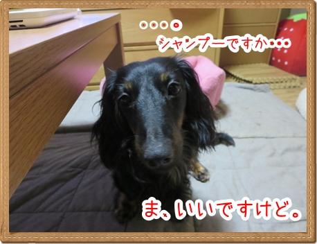 IMG_0601_2.jpg