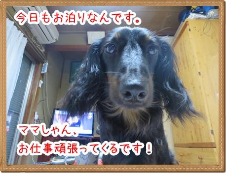 IMG_0601_3.jpg