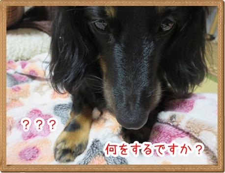 IMG_0606_2.jpg