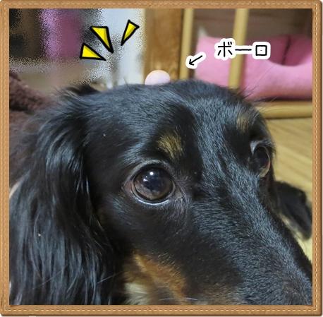 IMG_0606_4.jpg
