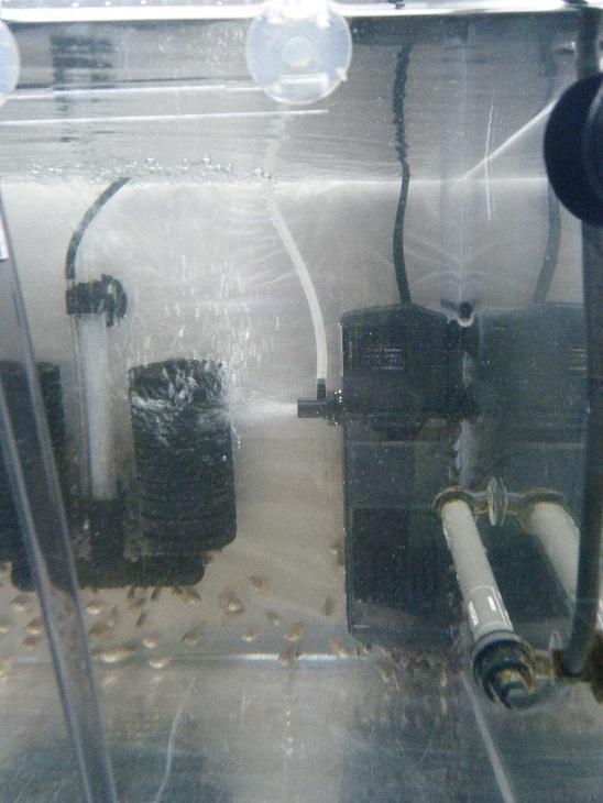 20140615-稚魚水槽フィルター大へ