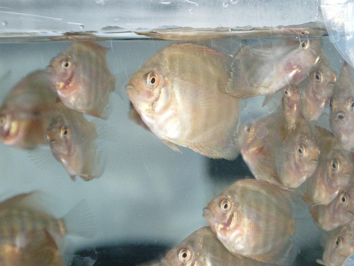 20140619-幼魚赤目化