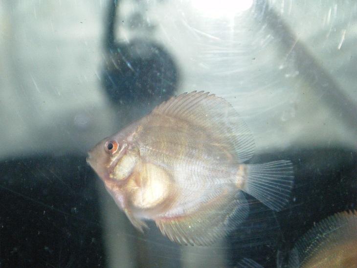 20140630-幼魚
