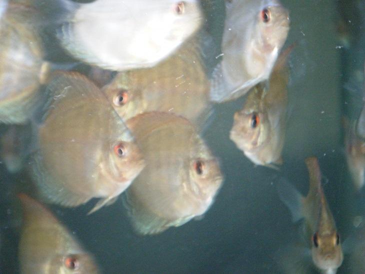 20140707-幼魚