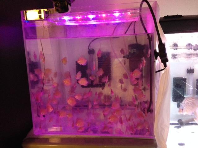 20140710-BV7幼魚水槽LEDライト変