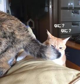 どしたの?!