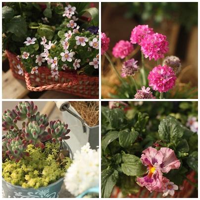 mini garden 5