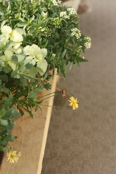 mini garden 6