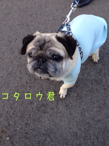 fc2blog_201403070613029fb.jpg