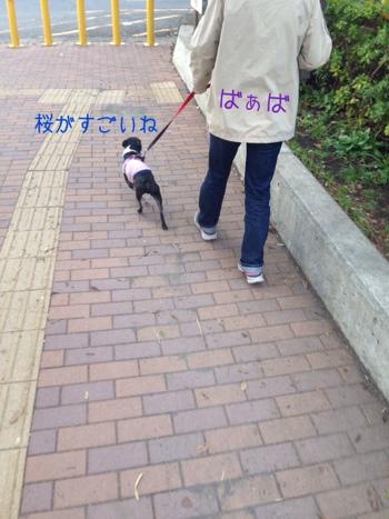 fc2blog_201404010635169a7.jpg
