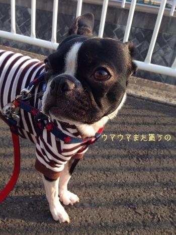 fc2blog_201404140644070c9.jpg