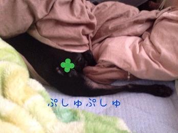 fc2blog_20140515063534888.jpg