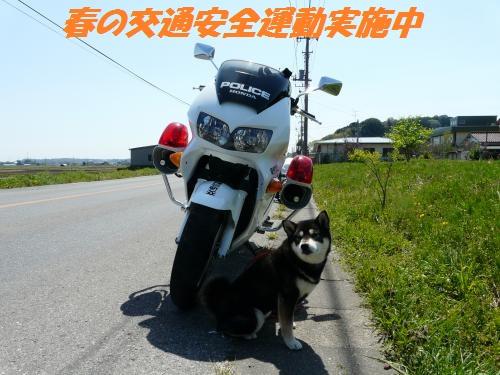 P1470329_convert.jpg