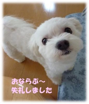 20140719-03.jpg