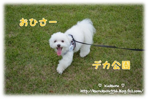 20140818-01.jpg