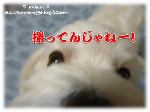 20141022-05.jpg